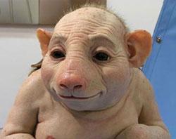 Так ли опасен свиной грипп?