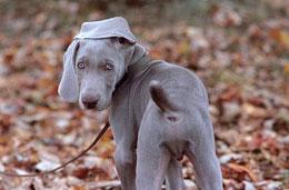 Почему наш щенок гоняется за хвостом и грызет его?