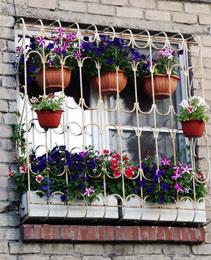 Как правильно расставить цветы на окне?
