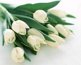 Как хранить срезанные цветы?