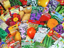 Как правильно выбрать семена цветов?