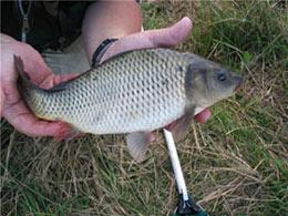 Как определить возраст рыбы?
