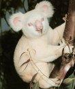 Почему у альбиносов красные глаза?