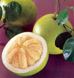Помело - что за фрукт такой?