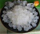 Чем полезен гриб «Морской индийский рис»?