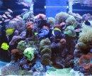 Какое место выбрать для аквариума?