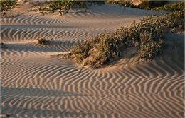 Зыбучий песок - что это такое?