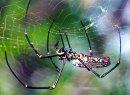 Почему паук не попадает в свою собственную сеть?