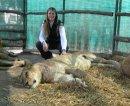 Можно ли гладить животных в зоопарке?