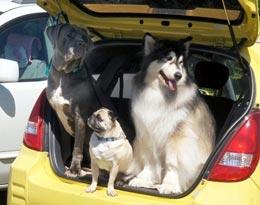 Как поехать с животным в Крым?