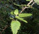 Какое самое опасное растение на планете?