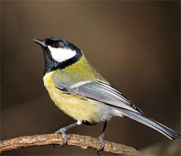Как птицы не падают с веток и проводов?