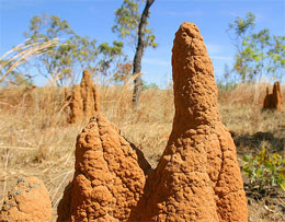 Как термиты охлаждают свои жилища?