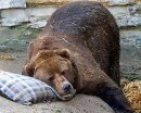 Впадают ли в спячку животные в зоопарке?