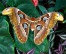 Чем  бабочки отличаются от мотыльков?