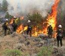Лесные пожары - только вред?