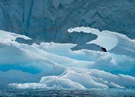 Как выживают растения и животные в Антарктике?