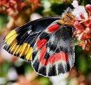 Что мы знаем о бабочках?