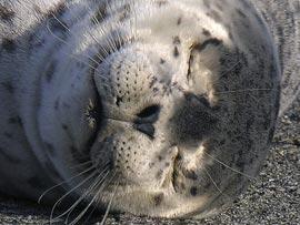 Зачем животным усы?