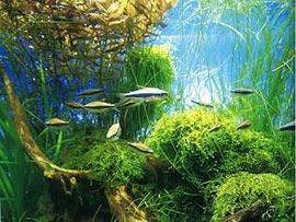 Как подобрать аквариум в дом?