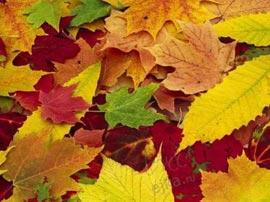 Почему листья осенью желтеют?