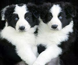 Как правильно выбрать щенка?