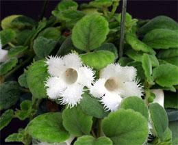 Ампельные растения - какие они?
