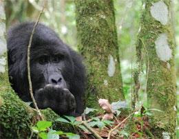 Какой самый известный «парк в Уганде»?