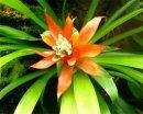 Какие растения цветут один раз?