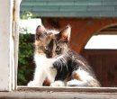 Что делать, если вы подобрали бездомного котенка?