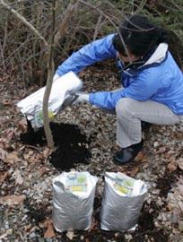 Как влияют азот, фосфор и калий на рост растений?