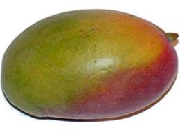 Что за плод манго?