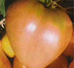 Какой самый хороший сорт помидоров?