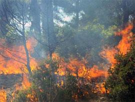 Как возникает лесной пожар?