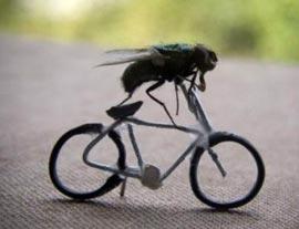 Почему «прихлопнуть» муху так трудно?