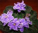 Как домашние растения влияют на жизнь?