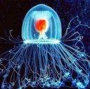 Существует ли в живой природе бессмертное существо?