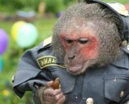 Как обзывают полицию?