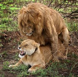 Кто из животных занимается сексом ради удовольствия?