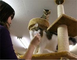 """Что такое """"кошачье кафе""""?"""