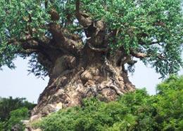 Какое дерево называется железным?