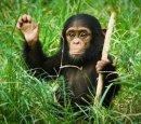 Почему сейчас обезьяны не превращаются в людей?