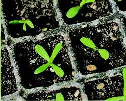 Какие бывают способы посева семян?