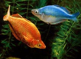 Как аквариумные рыбки могут избавить вас от одиночества?