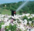 Какова роль воды в развитии растений?