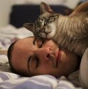 Как кошки лечат людей?