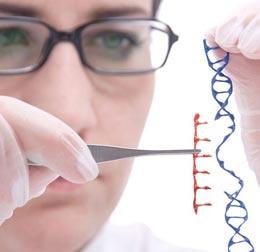 Что такое генная инженерия?
