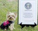 Какая самая миниатюрная служебная собака?