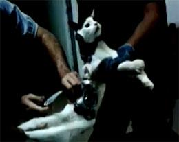 Почему на Новый Год арестовали кота?