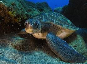 Почему черепахи лишились гена голода?